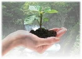 Consejos para ahorrar cuidando del medio ambiente
