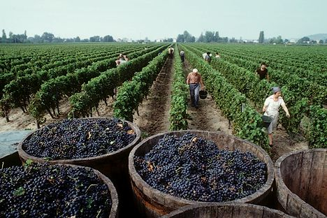 Los residuos de pesticidas en alimentos en Europa siguen estando dentro de los límites de seguridad