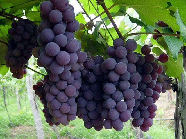Buenas prácticas en la industria del vino