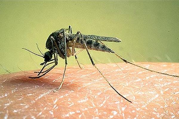 El virus de Zika, cómo se transmite y cómo nos afecta