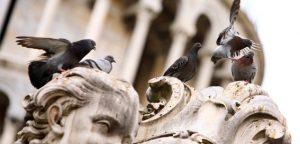 control-ave-palomas-eliminar-valladolid