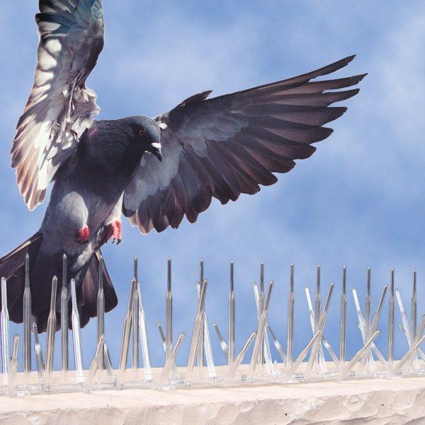 Plagas de aves en la industria alimentaria