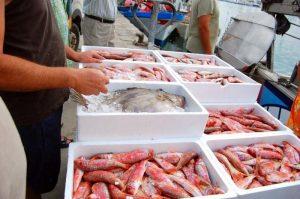 pescado-costa-del-sol-turismo-marinero-csota-del-sol