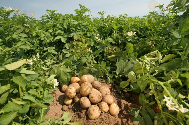 Seguridad alimentaria desde los cultivos