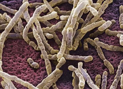 Las bacterias más peligrosas