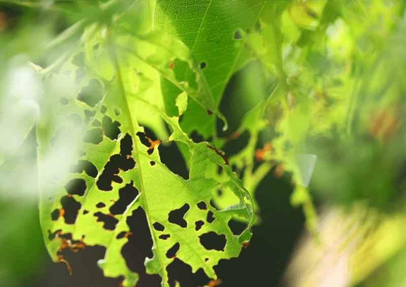 Plagas y enfermedades del huerto