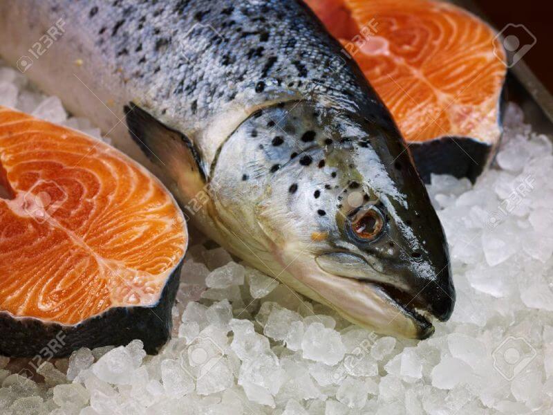 Los peces buscan desechos plásticos para alimentarse