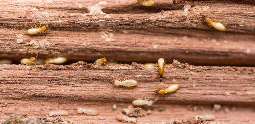 Todo lo que necesitas saber sobre un tratamiento de madera